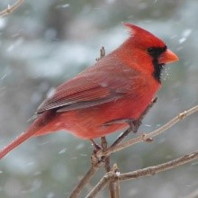 Table: West Nile virus human case statistics
