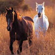 Table: West Nile virus mosquito, bird and veterinary statistics